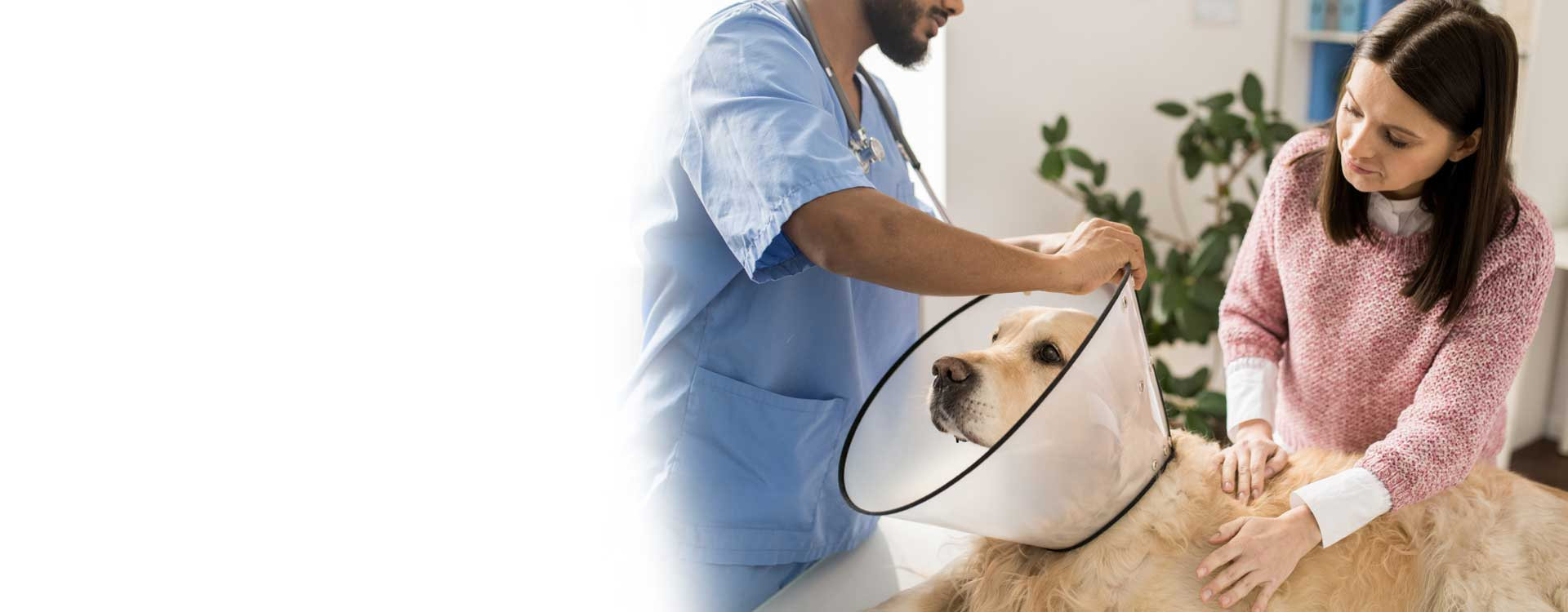 Hk veteriner Kliğini