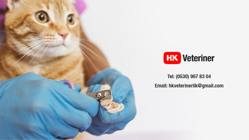 HK veteriner kliniği Mamak Ankara